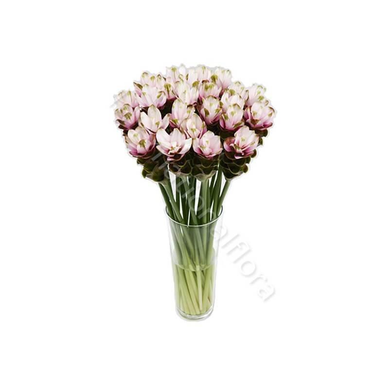 Bouquet di Curcuma