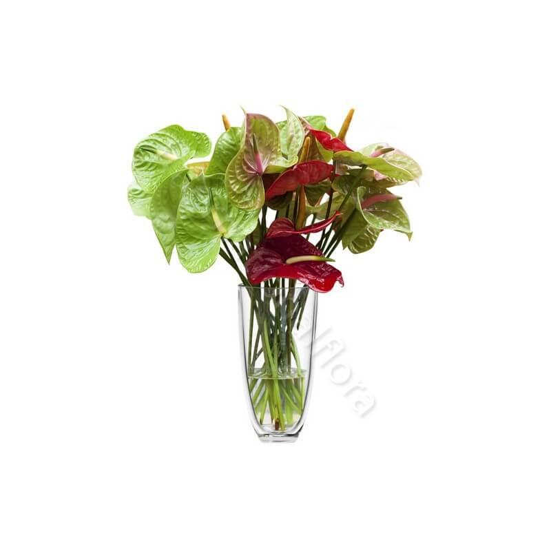 Bouquet di Anthurium internationalflora.com