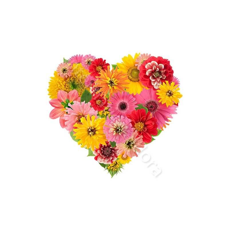 Cuore di Gerbere e Fiori colorati internationalflora.com