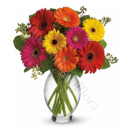 Bouquet di Gerbere colorate