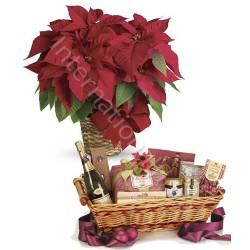Stella di Natale rossa con Cesto Natalizio