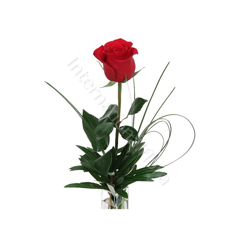 Rose rosse numero preciso internationalflora.com