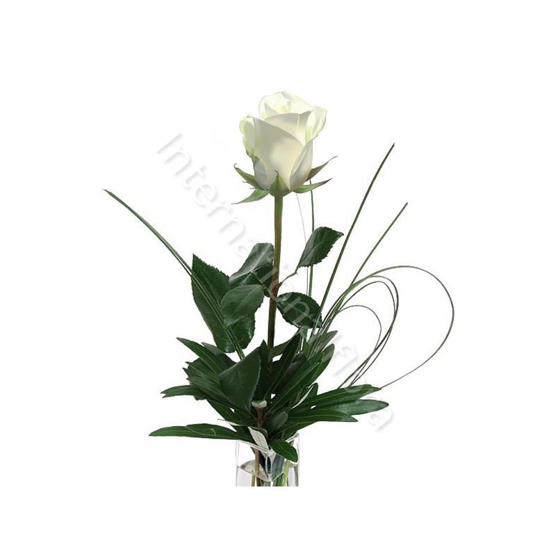 Rose bianche numero preciso internationalflora.com