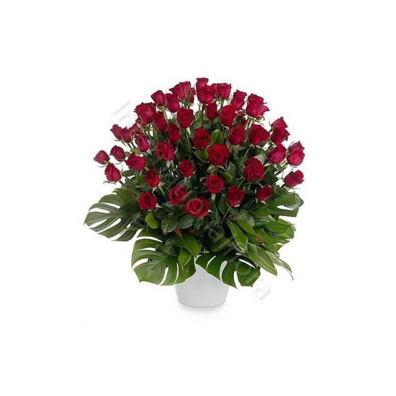 50 Rose Rosse