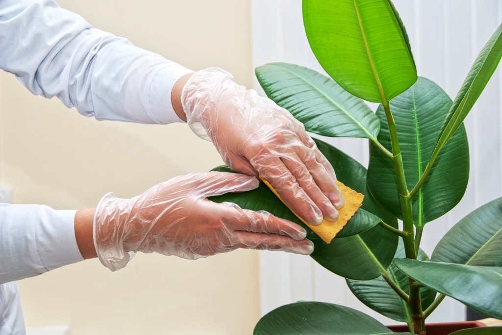 Tips for the care of houseplants