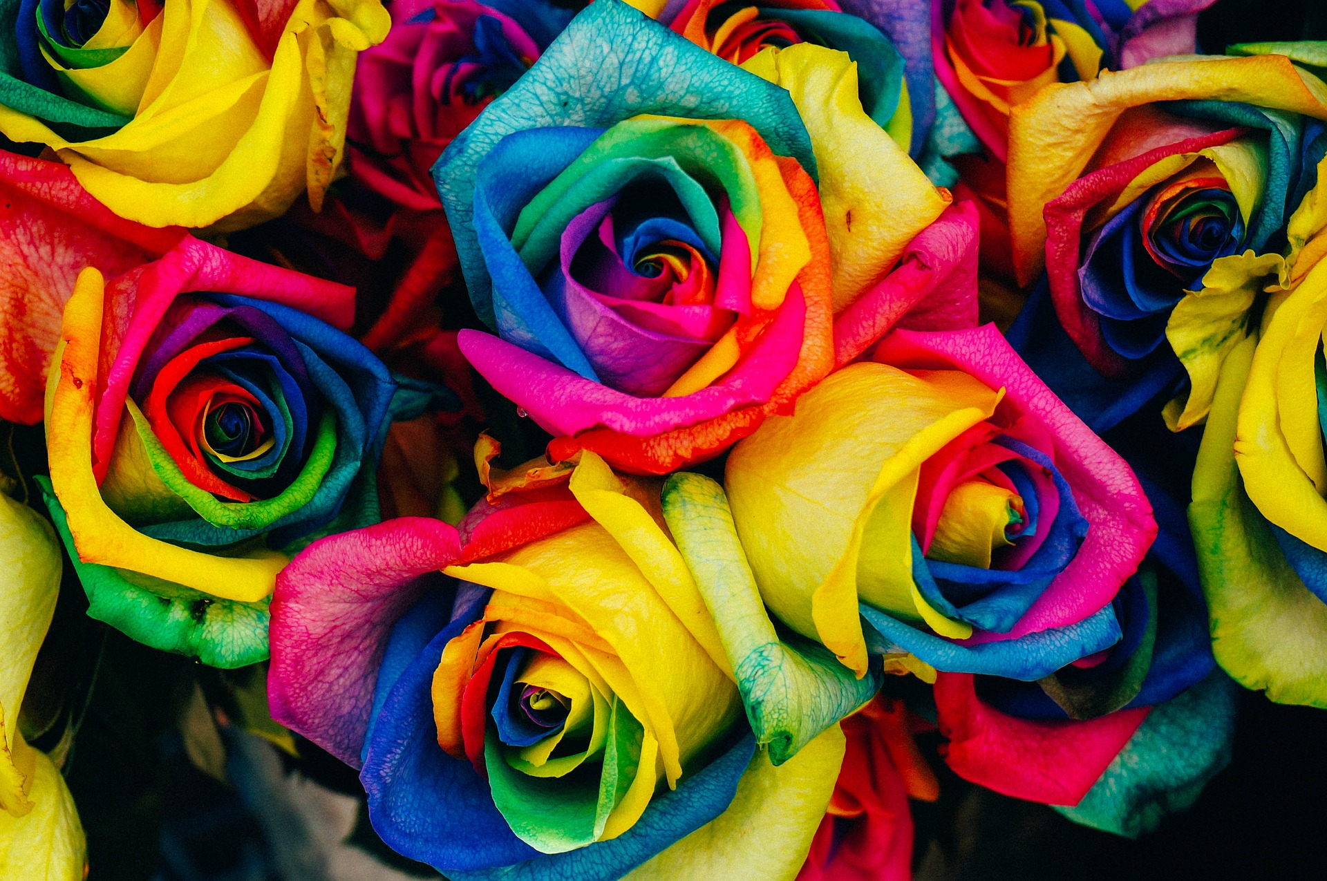 Flowers to give for gay
