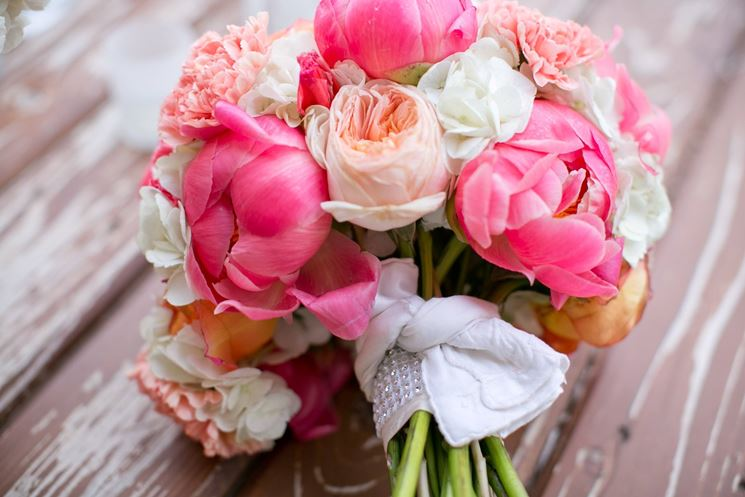 Flowers to give to ask forgiveness
