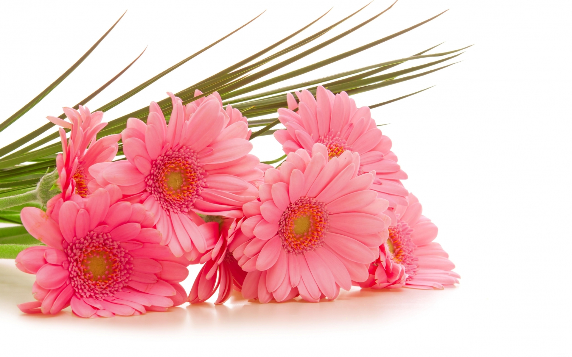 Flowers to give to thank