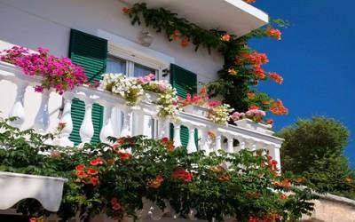 Le piante da balcone