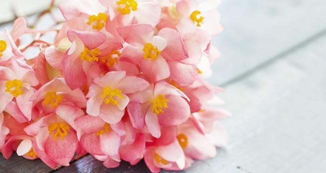 Case poco soleggiate – le Piante da fiore che vivono all'ombra