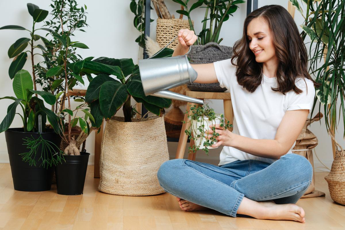 5 piante per interni facili da curare