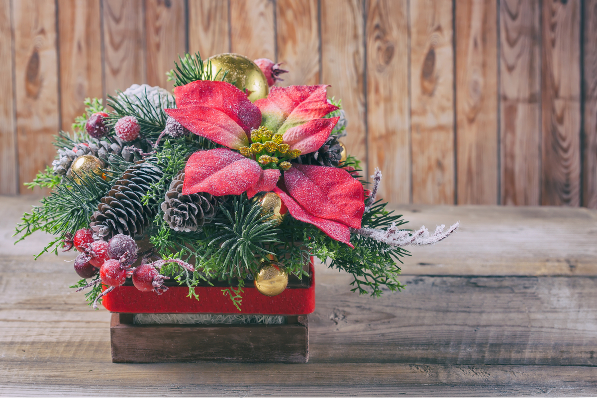 5 fiori di Natale da regalare per le festività