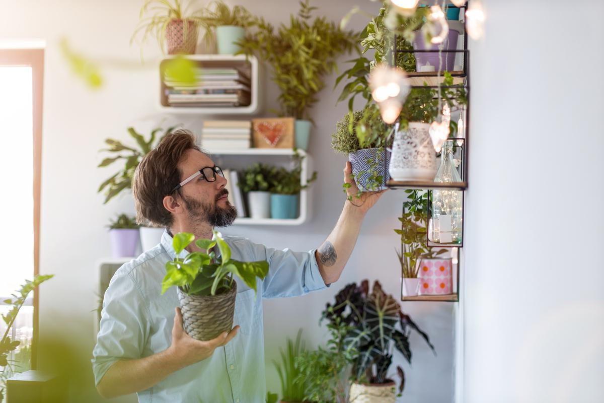 5 piante da regalare per una casa nuova