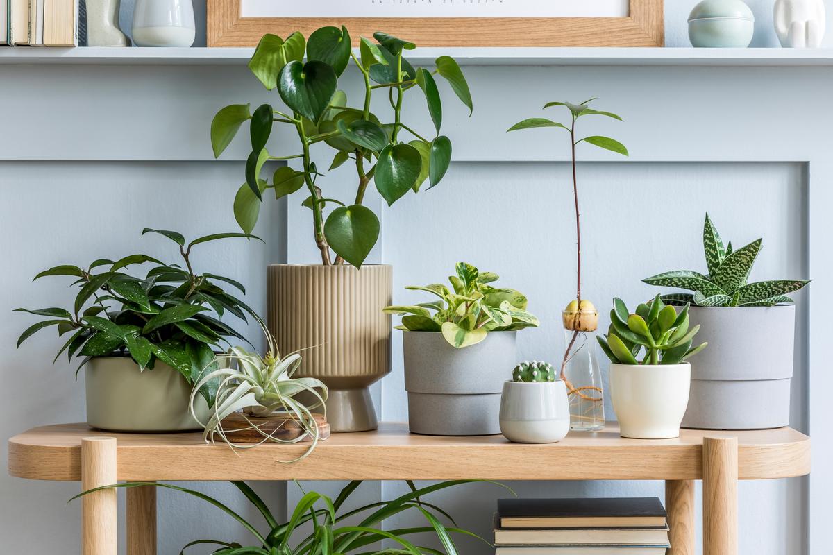 7 idee per arredare con le piante gli ambienti