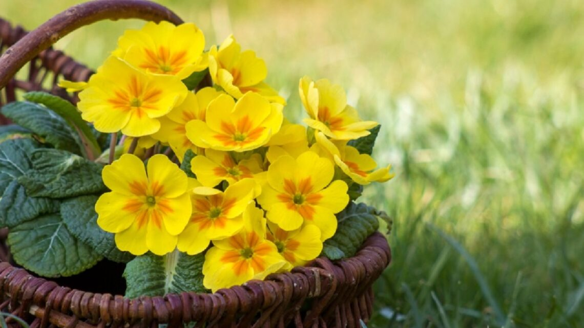 7 fiori primaverili gialli: dai più famosi ai più rari