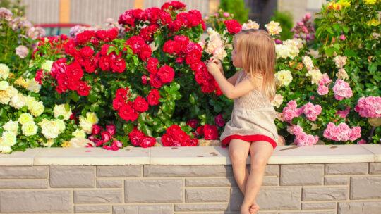 Quali sono i fiori resistenti al sole diretto?