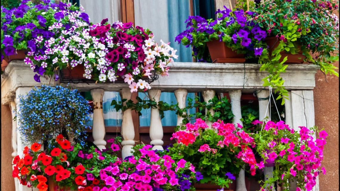 5 piante estive da balcone che arredano e danno colore