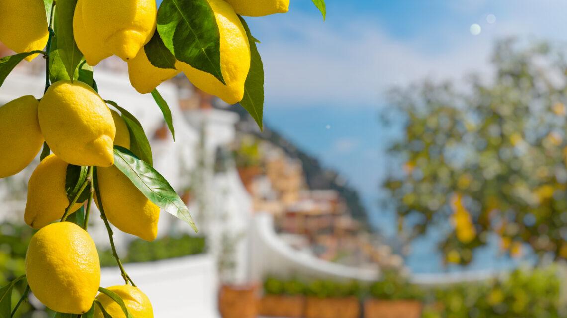 Regalare un limone: il significato nel linguaggio dei fiori